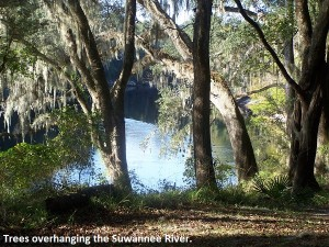 The river scenery is quite beautiful! Live Oak, FL