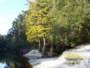 Suwannee River State Park riverfront