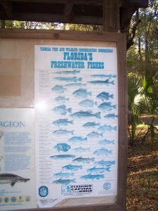 A long list of the many fish in the Suwannee River