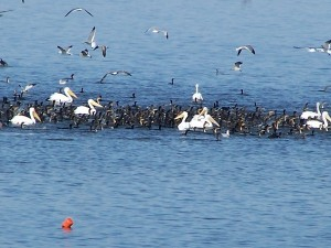 That's a lot of water birds!